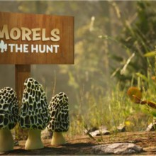 Morels: The Hunt (v05.06.2020) Game Free Download